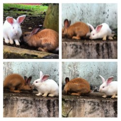 #rabbit #animal #iphonesia #cute #bunny