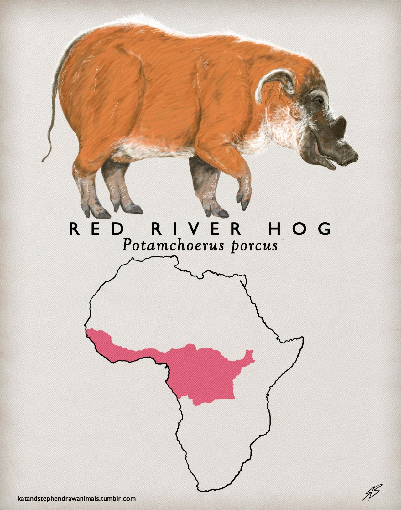 katandstephendrawanimals:  Red River Hog(Potamochoerus porcus) Arkive K- Hoglets! S- Striped pajamas.     New year, new format. Also, tumblr is a bitch.