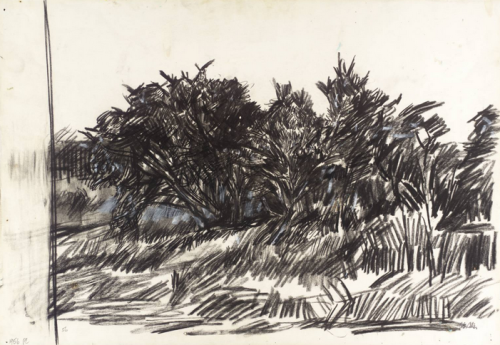 Peter Coker, Study for 'The Gorse Bush', c.1957.