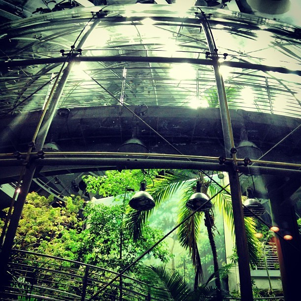 #plastic #jungle (at California Academy of Sciences)