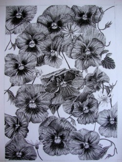 eatsleepdraw:  Pansies & daisies in felt-tip pen (0.03, 0.05, 0.1 & 0.5mm).