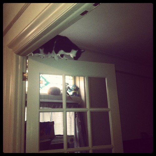 Get down from there, you stupid cat. 🙀