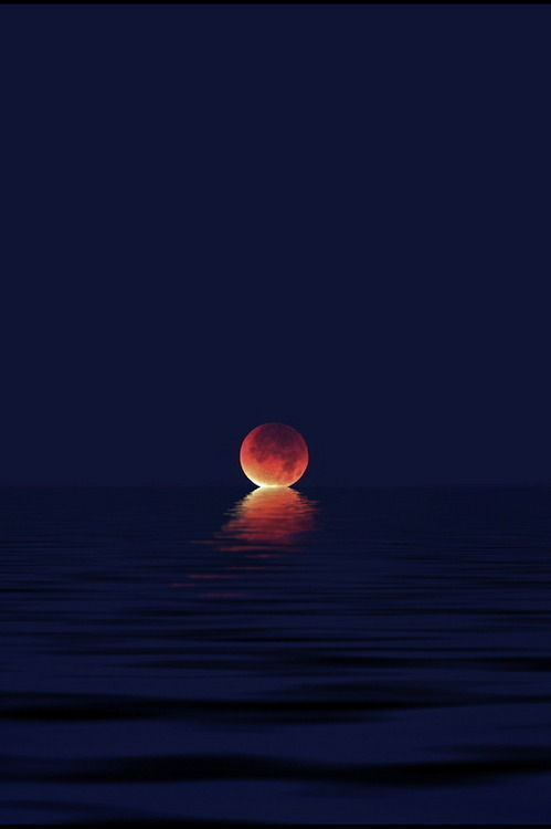 vibrasradicales:  once the moon kisses the ocean…