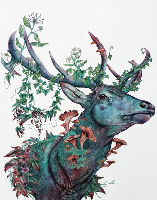 Tumblr Deer Drawing | www.pixshark.com - Images Galleries ...