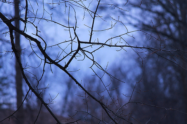 magic-spelldust:  darkness falls by january fairy on Flickr.