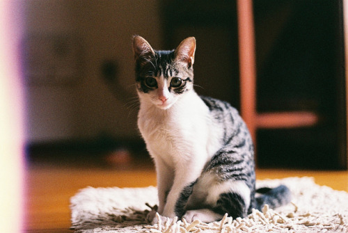4dele:  violeta by miguel miguel on Flickr.