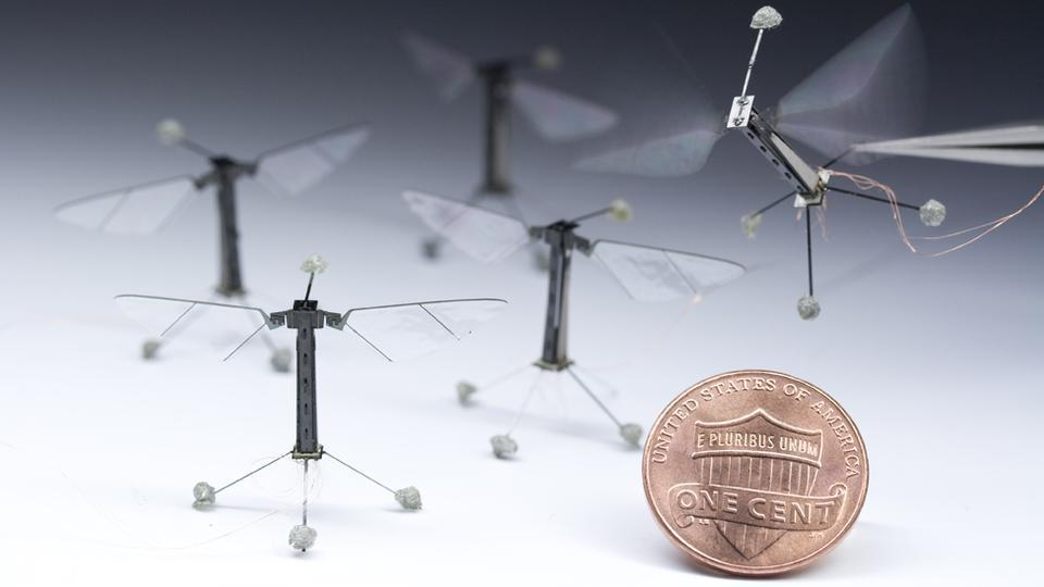 These are RoboBees, tiny flying robots developed at Harvard and weighing just 80 mg. There is currently no power source small enough to power their independent flight (you can see the tiny power cord on the flying one), but once that problem is solved developers hope to use them to monitor the environment and in search and rescue missions. They might also be useful for pollinating crops; that would sure come in handy if the worldwide collapse of bee populations continues or worsens. You can see them in flight here.
