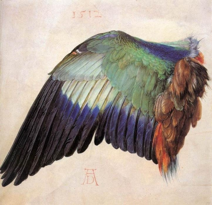 psychotic-art:  Wing of a Roller, Watercolour by Albrecht Durer (1471-1528, Germany)