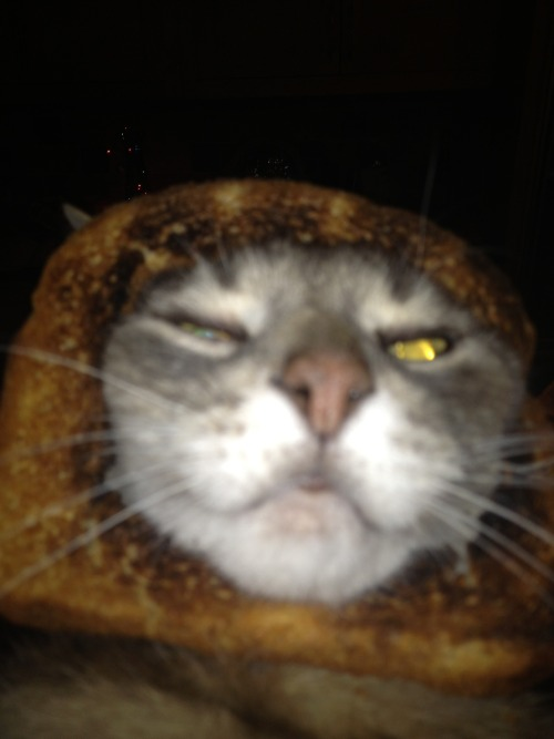 you are not toast cat. you aren't fooling anyone.