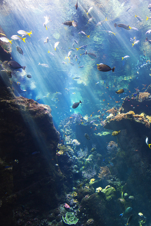 silent-cities:  Aquatic on @weheartit.com - http://whrt.it/112Opmr