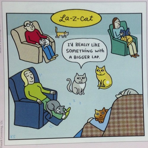 Meow meow joke of the day!! #monday #catjokes #joke #jokeoftheday #meow