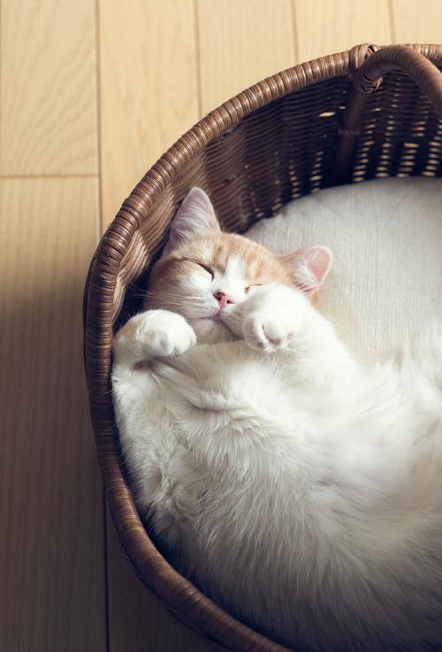 I životinje odmaraju - Page 3 Tumblr_mivyknuBfL1rpe0jco1_500