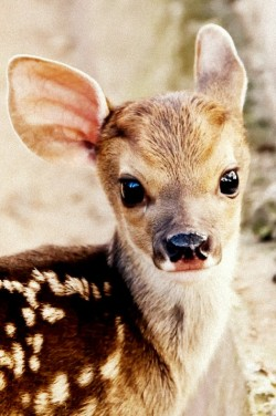 nosens:  OH MY GODNESS THIS IS TOO CUTE i want to date a deer