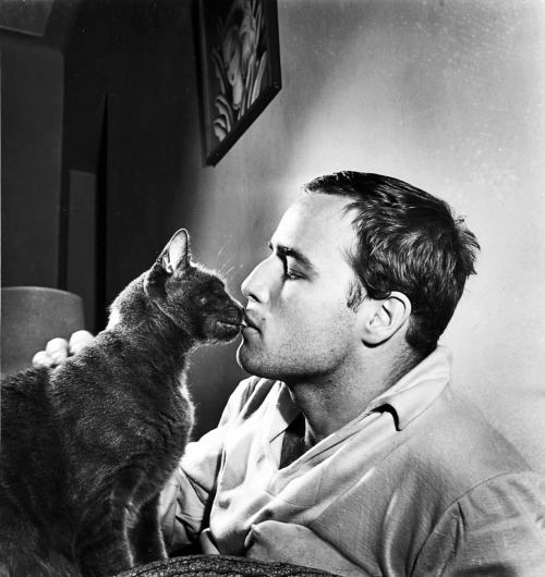 elisebrown:  Marlon Brando and a cat