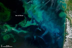 "scinerds:  Colorful phytoplankton blooms off the coast of France.  Nasa writes:  Blooms can be a blessing to other marine species, as these tiny floating plants often feed everything from zooplankton to fish to whales. But some algae and plankton blooms can turn dangerous, either through the production of chemical toxins or by severely depleting the oxygen supply in the ocean and creating ""dead zones"" that suffocate marine creatures."