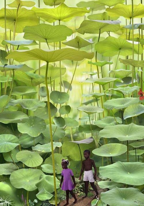 Lilly fern forest. Ruud van Empel