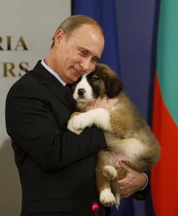 reuters:  From the Reuters Pictures archives: Russia President Vladimir Putin hugs a Bulgarian shepherd puppy, a gift from Bulgarian Prime Minister Boiko Borisov in 2010. Putin was seen walking the dog, now considerably larger (and fluffier), in March this year. Photo: REUTERS/Oleg Popov