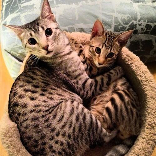 jessewelle: Nylah & Bambino