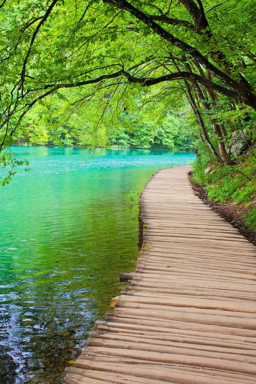 plitvice lake nature green croatia pond water bridge europe trave vertical