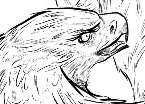 Here is some detail from the original inks of my Badger and Eagle piece. The eagle head was my favorite part.