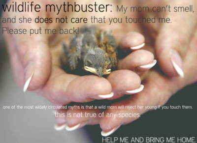 llbwwb:  PSA:My Mother never told me this! Reblog to save a baby Bird:)