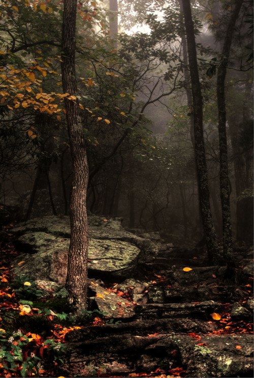 creepypurpleelves:  Fall… by Maria Jaeger