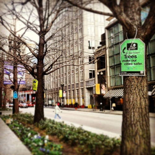 Morton Arboretum tagged trees in downtown Chicago