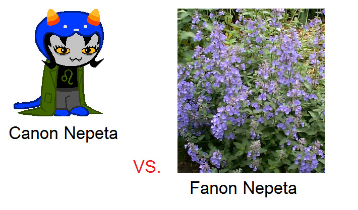 twwinkies:  i searched google images to see the fandumb's view on nepeta and it's totally wrong