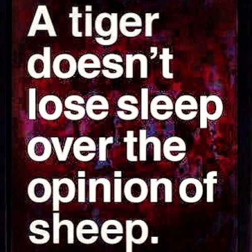 ordinaryguy13:  What are you? Tiger or Sheep? #Open #Mind #Think #Big #Legacy #Entrepreneur
