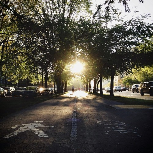 brooklynpoets:  Man vs Bike Eastern Parkway, Crown Heights Ian Sautner @i_c_s