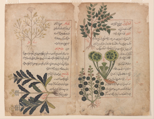 heaveninawildflower:  Double folio from a Kitab-i hasha'ish (The book of herbs). Manuscript dated September 1595 or 1645. Opaque watercolour and ink on paper.   Freer Gallery of Art  Google Art Project: Home via Wikimedia.