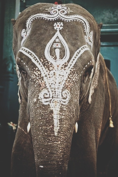 yourblood:  elephant on We Heart It - http://weheartit.com/entry/53038997/via/tissi   Hearted from: http://onetime4urmind.tumblr.com/post/43620500592