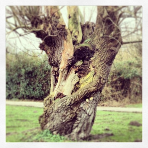 This tree mos def has a story  (bij Westerpark)