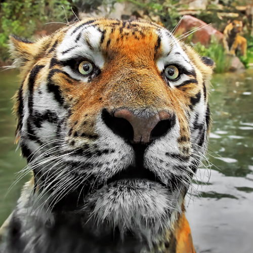 eyes-of-the-cat:  by Klaus Wiese