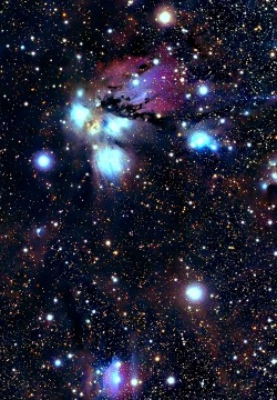 sagittariirising:  NGC 2170 is a reflection nebula in the constellation Monoceros. It was discovered on October 16, 1784 by William Herschel.