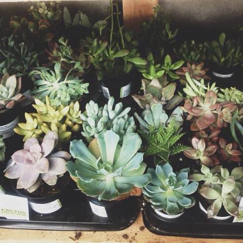 I live at Home Depot. #succulents