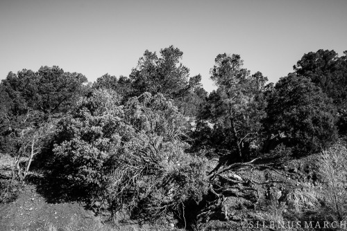 Santa Fe National Forest. SonyRX100.
