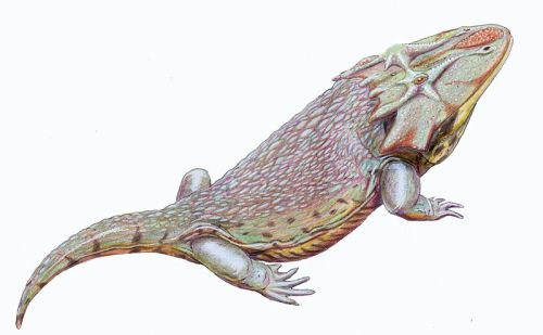 rhamphotheca:  Dasyceps bucklandi - unusual temnospondyl from Early Permian of England. (illustration by Dmitry Bogdanov)