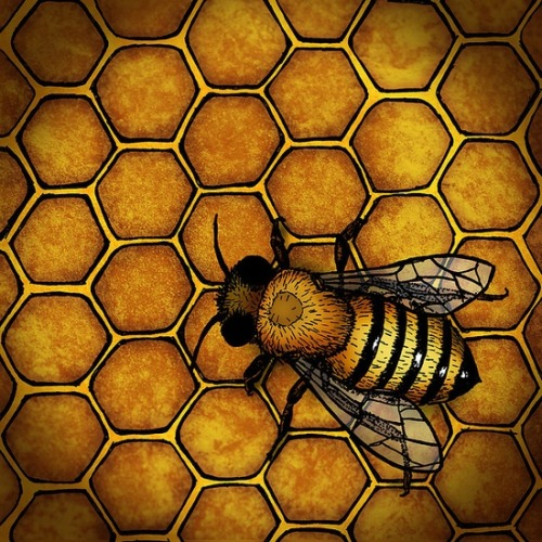 "cosmic-rebirth:  ""The Honey Bee,"" by A.D. Miller"
