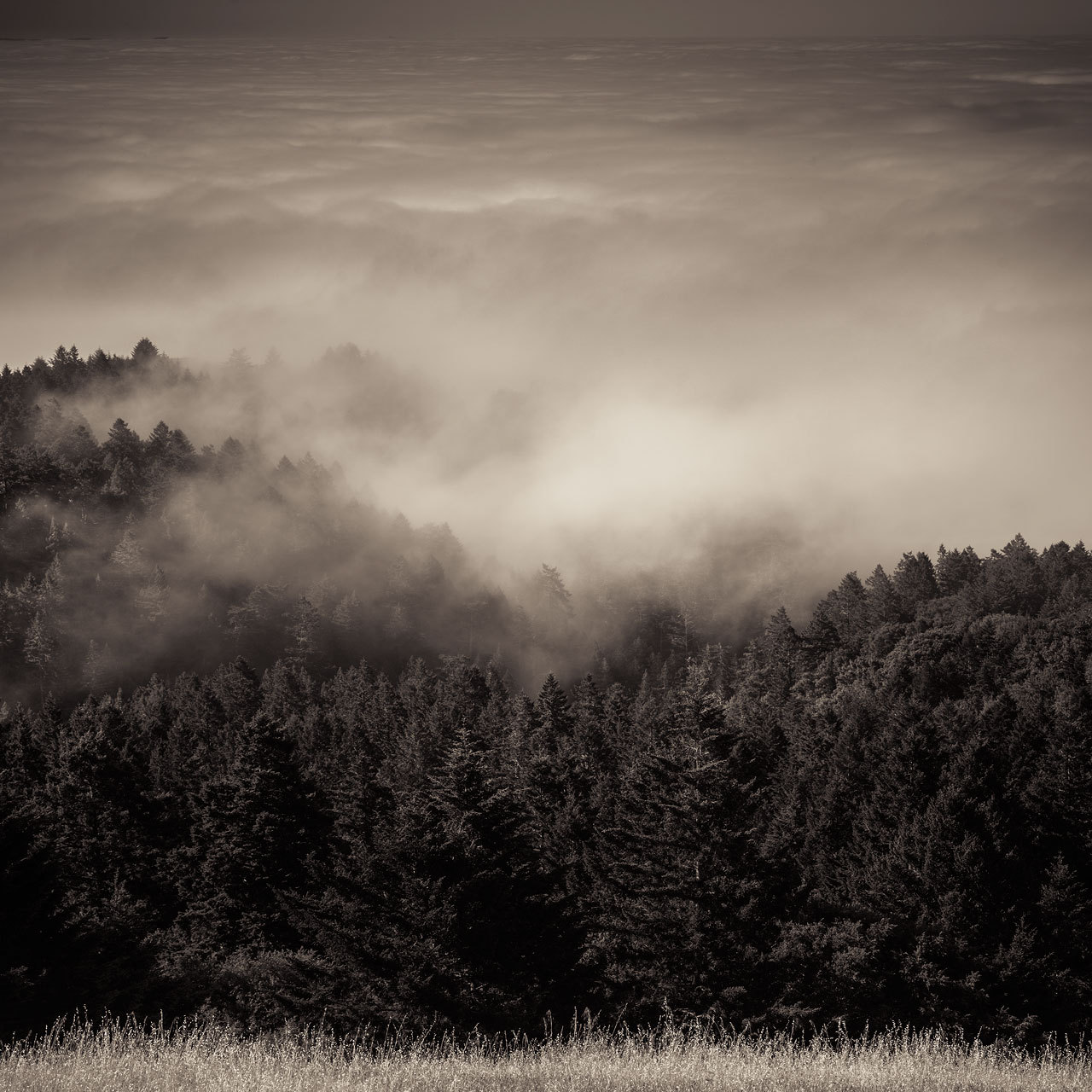 Forest Faded  Looking down on a forested hillside enveloped by fog  This was taken on the road up Mt. Tamalpais. The entire mountain was engulfed in fog all around, and once I finally managed to burst through the clouds, it made for a great opportunity to take a shot. I will probably post some shots from the summit over the next few days.  I also want to start getting in to black and white photography. It's been a long time since I've done anything in this field - partly because they seem to be less popular than my colorful landscape stuff - but I don't want the work I create to be dependant on meaningless viewer metrics. I've always felt its important to create the art you want to create, and I'm going to keep doing that.  I've probably spent too much time talking about lens sharpness lately. Although I do enjoy digging into the nitty gritty technical details of these lenses on a pixel-per-pixel level - and I'll continue to do so - I have to admit that it just isn't particularly important. The fact is, pretty much any lens is going to be pretty sharp on a modern camera. Case in point, this shot, taken with the Nikkor 28mm-80mm 1:3.3-5.6G.