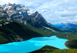 crafty-nature:  Peyto Lake Blue by Cole Chase Photography on Flickr.