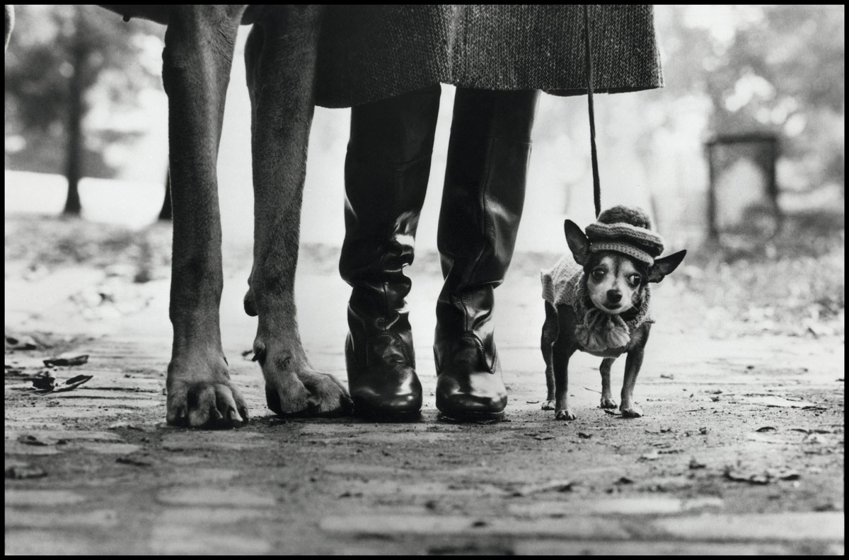 """Felix, Gladys and Rover"" by Elliott Erwitt (1974)"