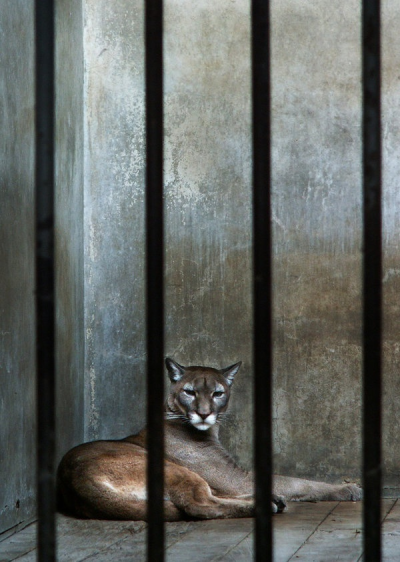 eqiunox:  A prison called zoo 4 by ~marnin2046