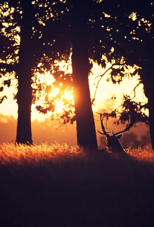 earth-song:  0rient-express: Solitray | by mark bridger.