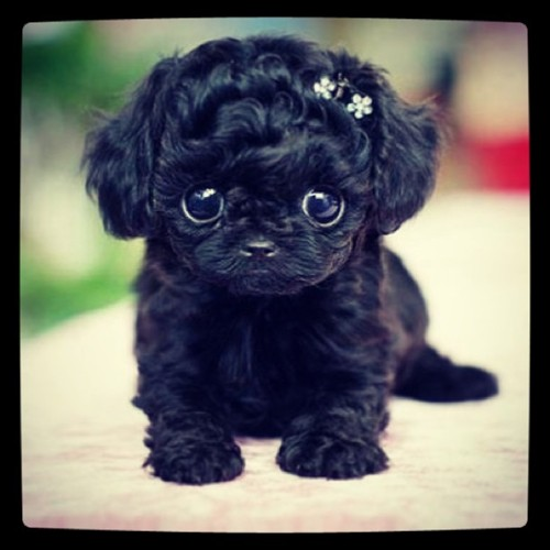 I want this little puppy 😍🐶❤ #puppy #cute!