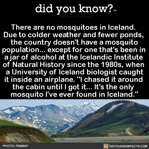 there-are-no-mosquitoes-in-iceland-due-to-colder
