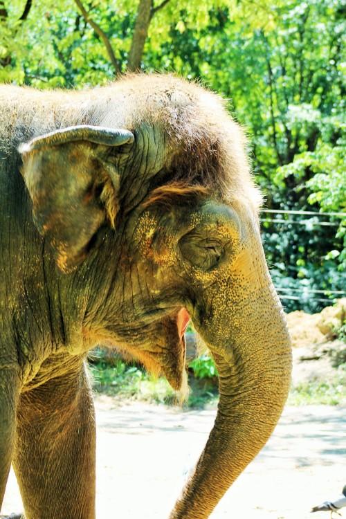 ampphoto:  Adorable Elephant! Cincinnati Zoo ampphoto.tumblr.com