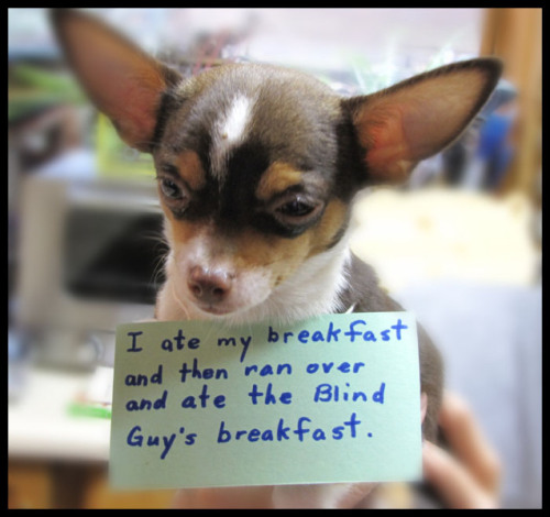 dogshaming:  I Eat the Blind Guy's FoodI'm Pedro and my housedog is a blind dog, Miko. I race over after I eat my own breakfast and steal…View Post