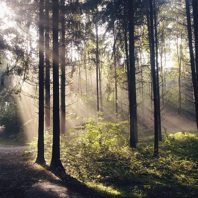 #forest #travel #sunshine #sunlight #trees #rayoflight #switzerland #switzerlandwonderland #walk #spring #nature #iphone #vscocam