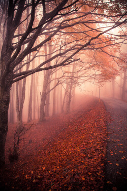 trees dream Halloween enchanted nature forest fantasy autumn fairytale pagan wicca enchanted forest